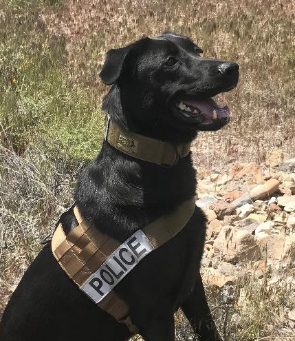 West Wendover Police K-9 Astro, Sniffs Out Crime